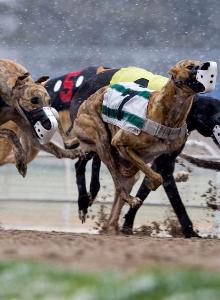 raining dog race thumb sunday.jpg